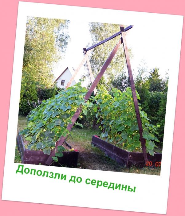 3587765_DSC_28701 (602x700, 312Kb)