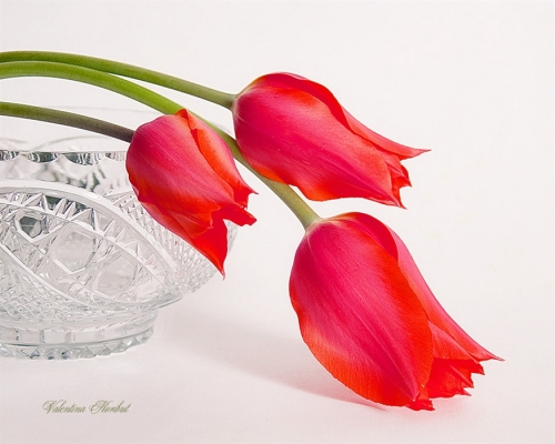 валентина корибут натюрм 9 (500x400, 173Kb)