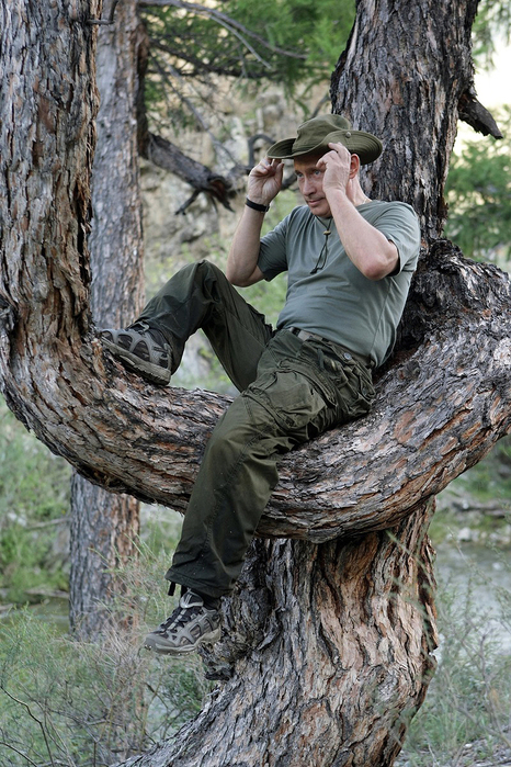 Putin-in-a-Tree (466x700, 402Kb)