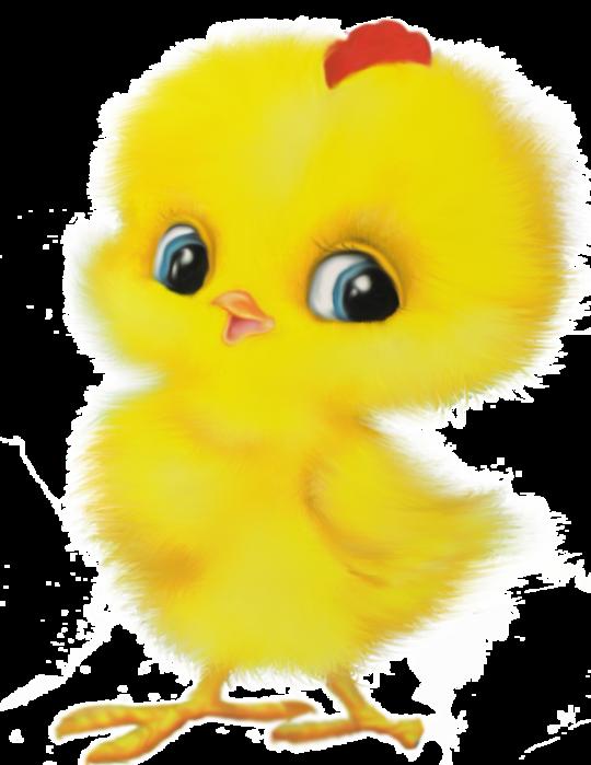 Цыплята картинка для детей