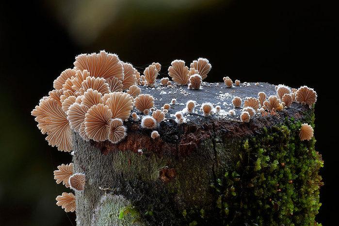 Волшебный мир грибов