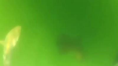 4208855_930787 (400x225, 7Kb)