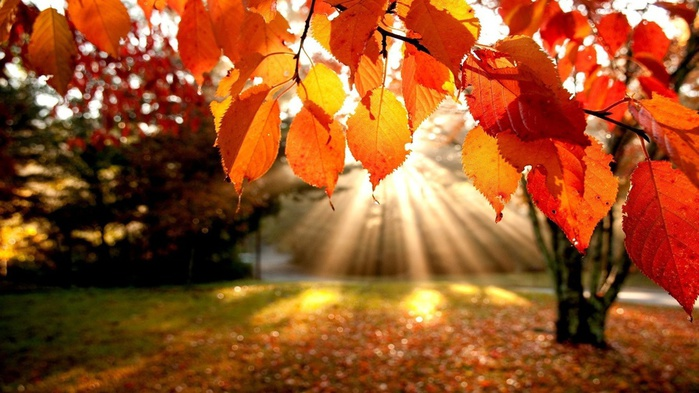 autumn-leaves-wallpaper (700x393, 124Kb)