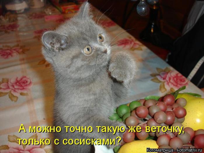 kotomatritsa_gN (700x524, 353Kb)