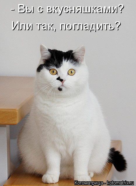 kotomatritsa_2 (466x640, 160Kb)