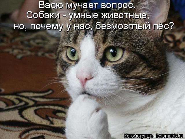 kotomatritsa_ih (640x480, 223Kb)