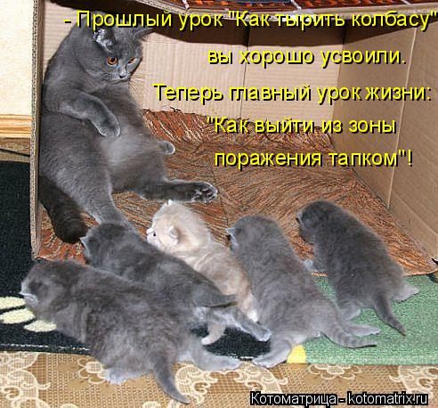 kotomatritsa_pM (492x458, 268Kb)