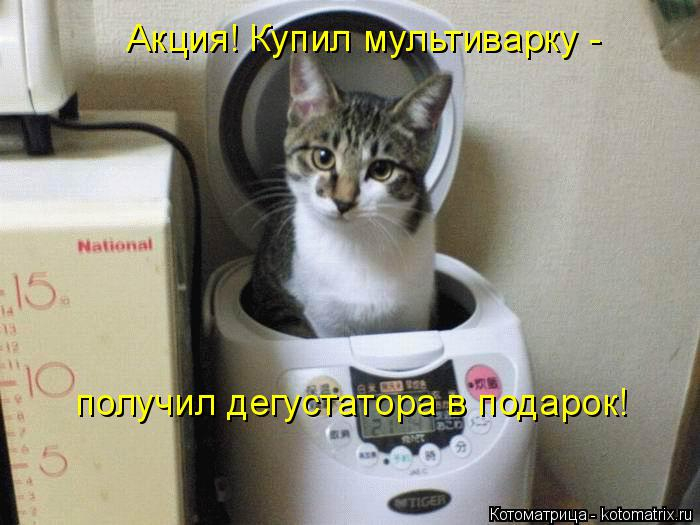 kotomatritsa_Sf (700x525, 248Kb)