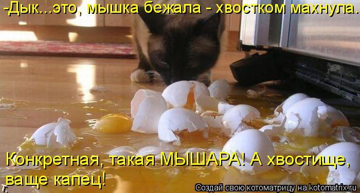 kotomatritsa_w (700x377, 272Kb)