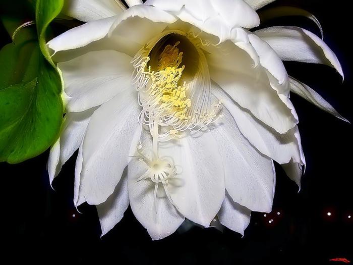 самые редкорастущие цветы (700x525, 290Kb)