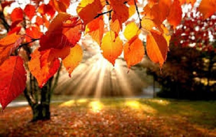 картинки завтра осень