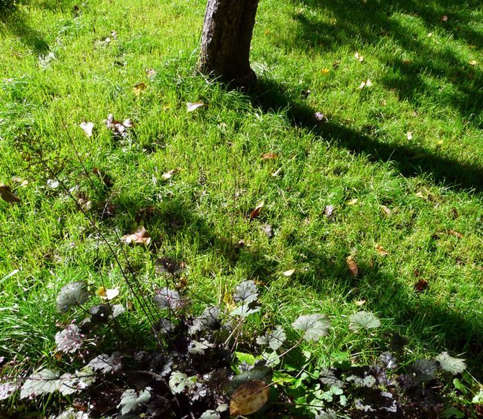 Зеленая трава на садовом участке/3241858_sad05 (700x608, 166Kb)