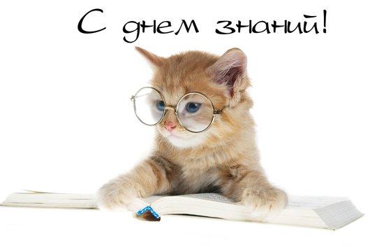 5698144_denznaniyvstihah (550x353, 20Kb)