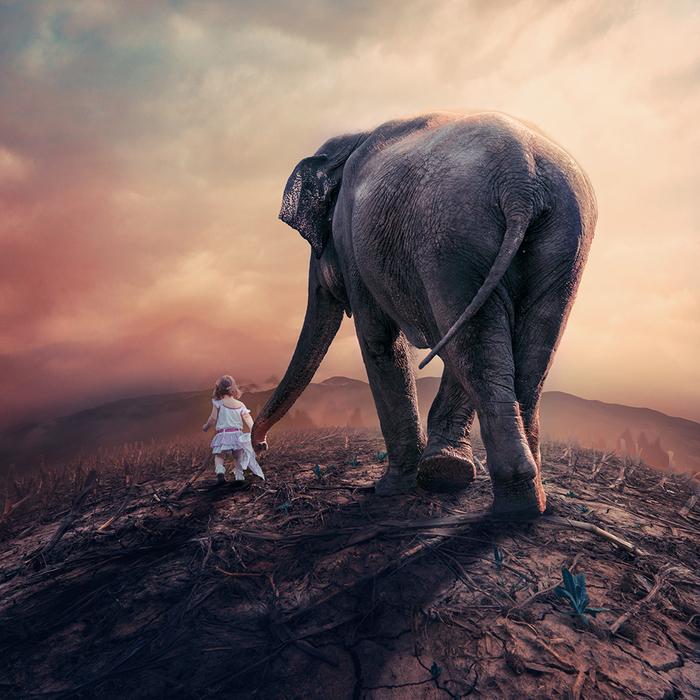 красивые-картинки-слон-живность-детство-1445424 (700x700, 507Kb)