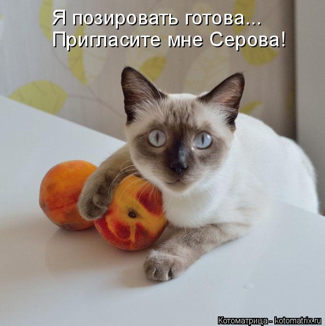 kotomatritsa_55 (640x641, 208Kb)