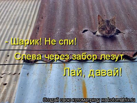 kotomatritsa_NB (467x351, 181Kb)