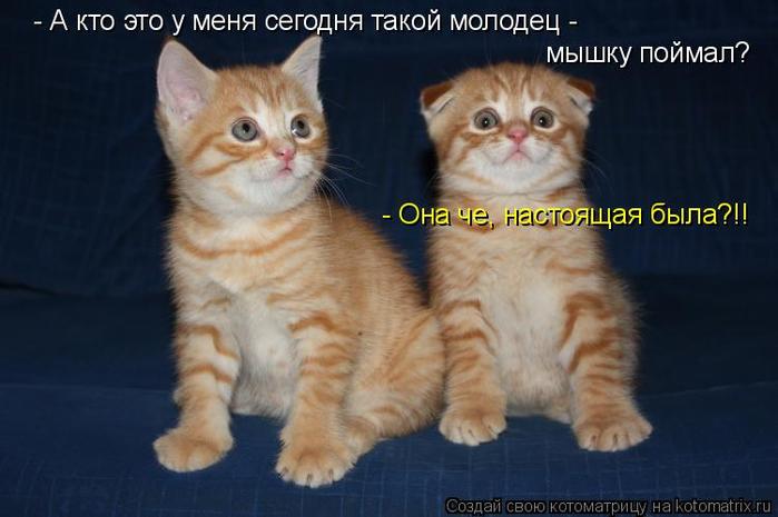 kotomatritsa_iy (700x465, 259Kb)