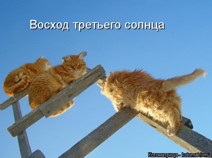 kotomatritsa_sk (700x524, 199Kb)
