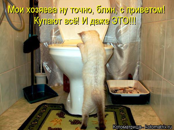 kotomatritsa_U (600x450, 250Kb)