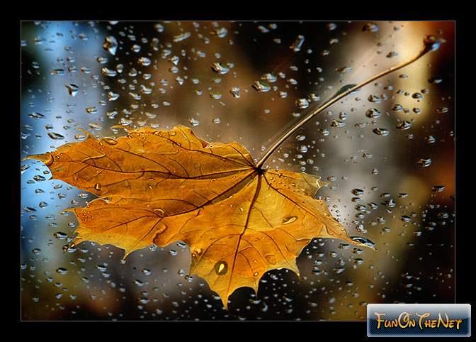 leaf-in-rain (672x482, 304Kb)