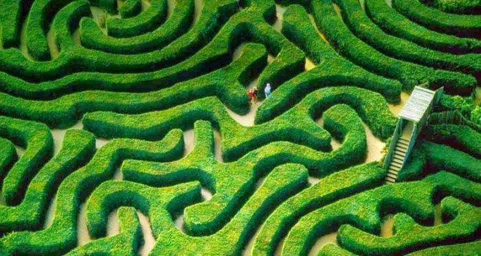 лабиринт Longleat Hedge Maze в англии 2 (700x373, 333Kb)