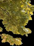 Превью клипарт листва дерева (366x500, 346Kb)
