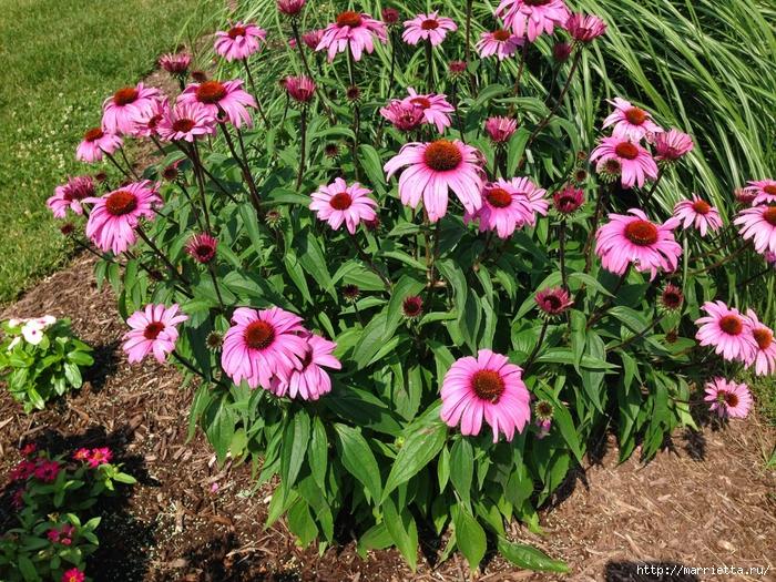 Цветы из мешковины - Эхинацея Пурпурная. Мастер-класс (1) (700x525, 484Kb)