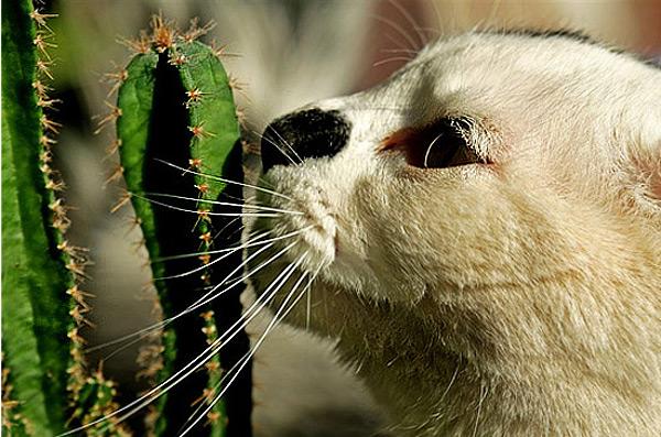 cat_cactus_2 (600x397, 116Kb)