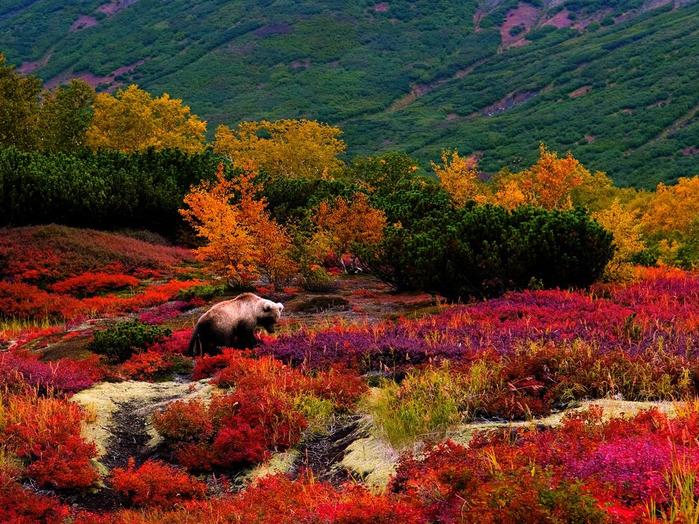 Самые красивые природы камчатки