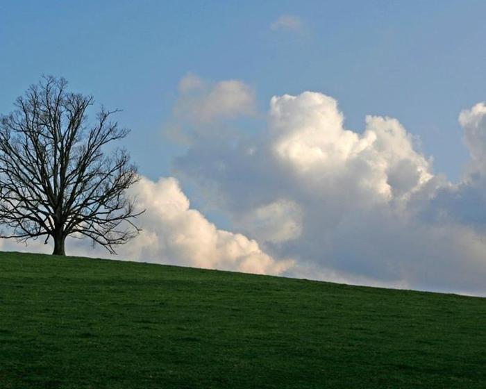 Красивые фотографии одиноких деревьев на полях