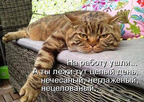 116307051_3416556_getImage (492x349, 62Kb)