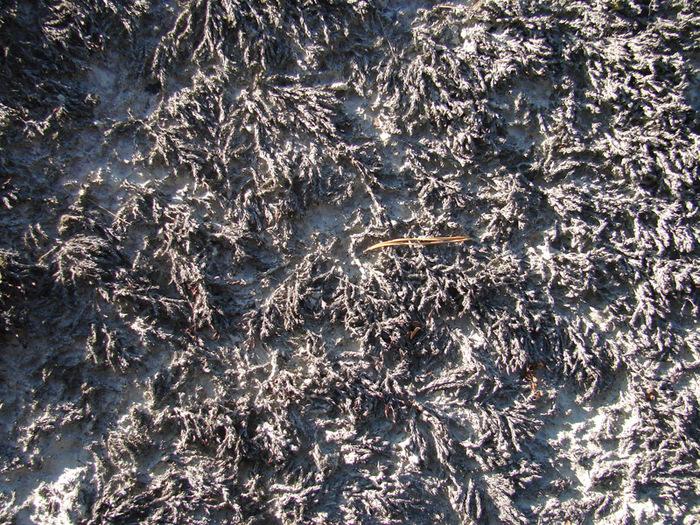 Песок с лишайником/1415502_7 (700x525, 302Kb)