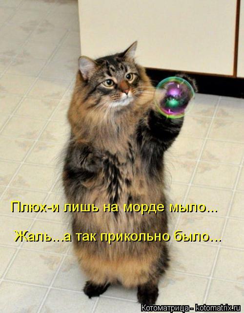 kotomatritsa_B7 (500x640, 229Kb)