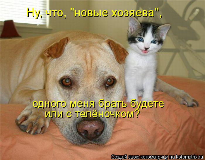 kotomatritsa_cR (700x547, 309Kb)