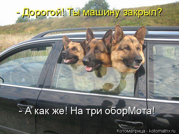 kotomatritsa_h (604x453, 270Kb)