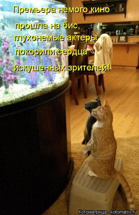 kotomatritsa_KV (452x700, 324Kb)