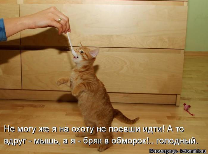 kotomatritsa_U (700x519, 280Kb)