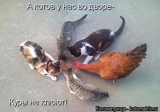 kotomatritsa_Y9 (526x369, 139Kb)