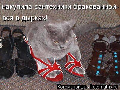 kotomatritsa_wX (403x302, 148Kb)