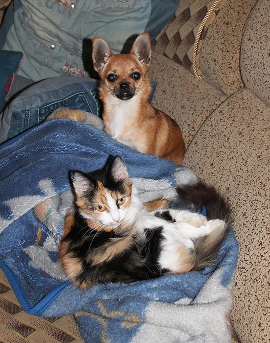 пес и кот/4800487_2 (551x700, 487Kb)
