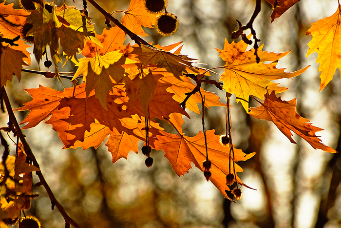 Autumn3_by_DIliev (700x467, 478Kb)