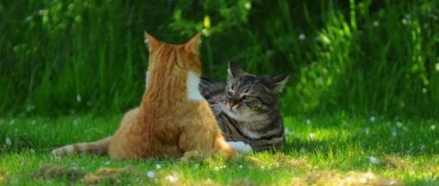 Кошачья заруба (640x272, 147Kb)