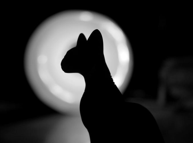 кошка луна ночь