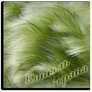 ковыль-трава-j (300x300, 187Kb)