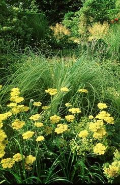 тысячелистник и трава (236x363, 174Kb)