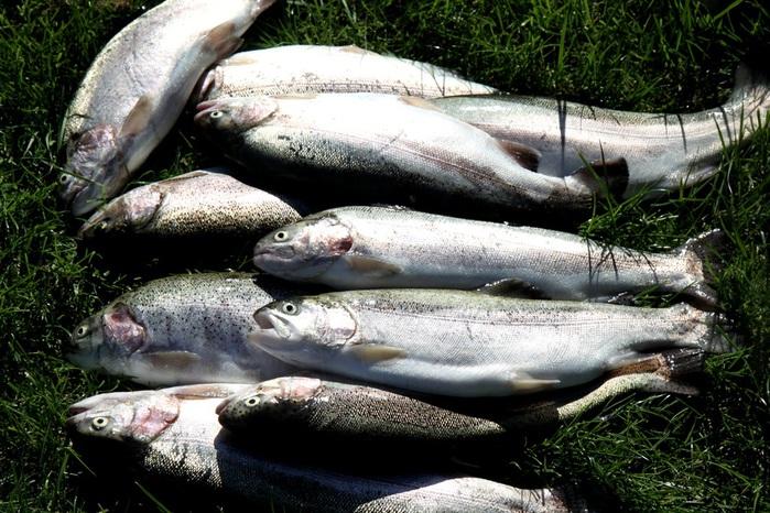 бисеровский рыбхоз рыбалка форель