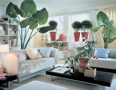 неприхотливые комнатные растения/4565316_044066 (400x312, 31Kb)