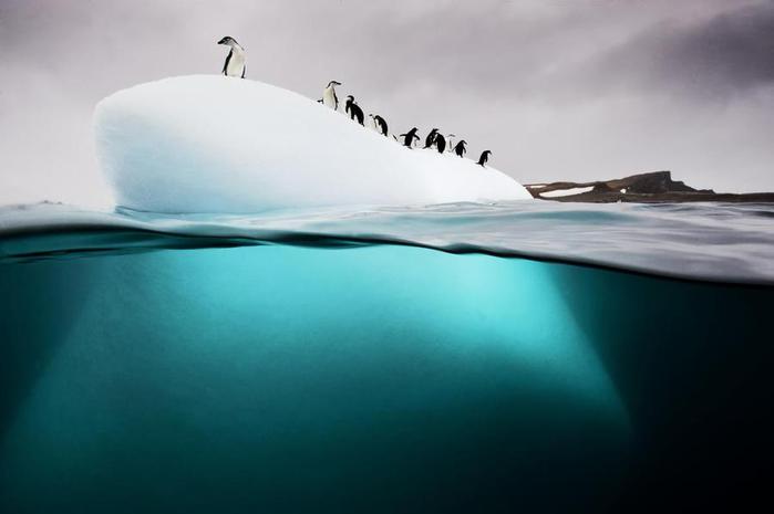 95431437_large_Gala_Dinner_Antarctica_Jan2011_00011 (700x465, 139Kb)
