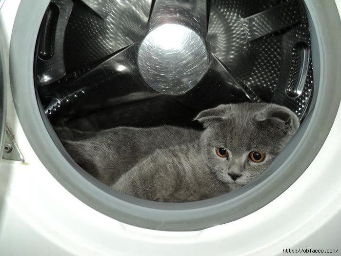 кошки приколы кот Стейк
