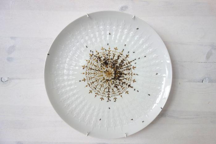 посуда с муравьями Эвелин Баклоу 3 (700x466, 274Kb)